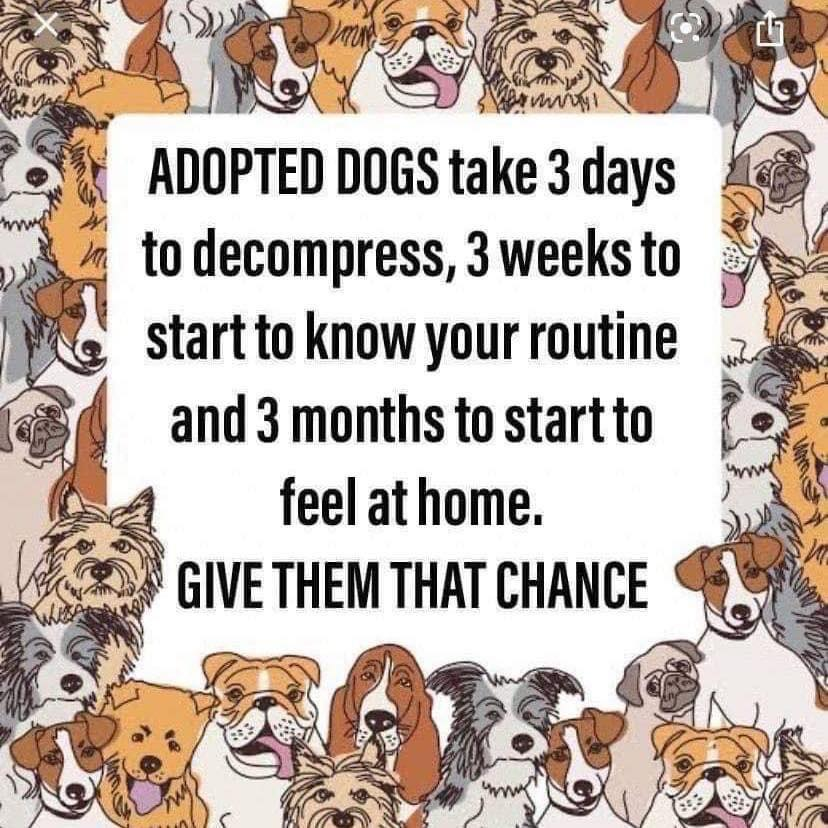 Adopted dogs need time to adjust