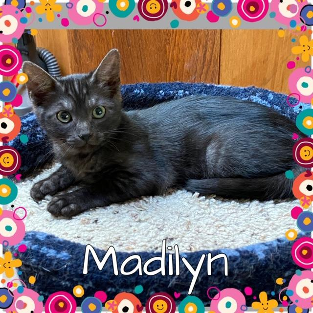 Madilyn