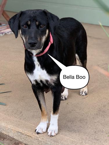 Bella Boo