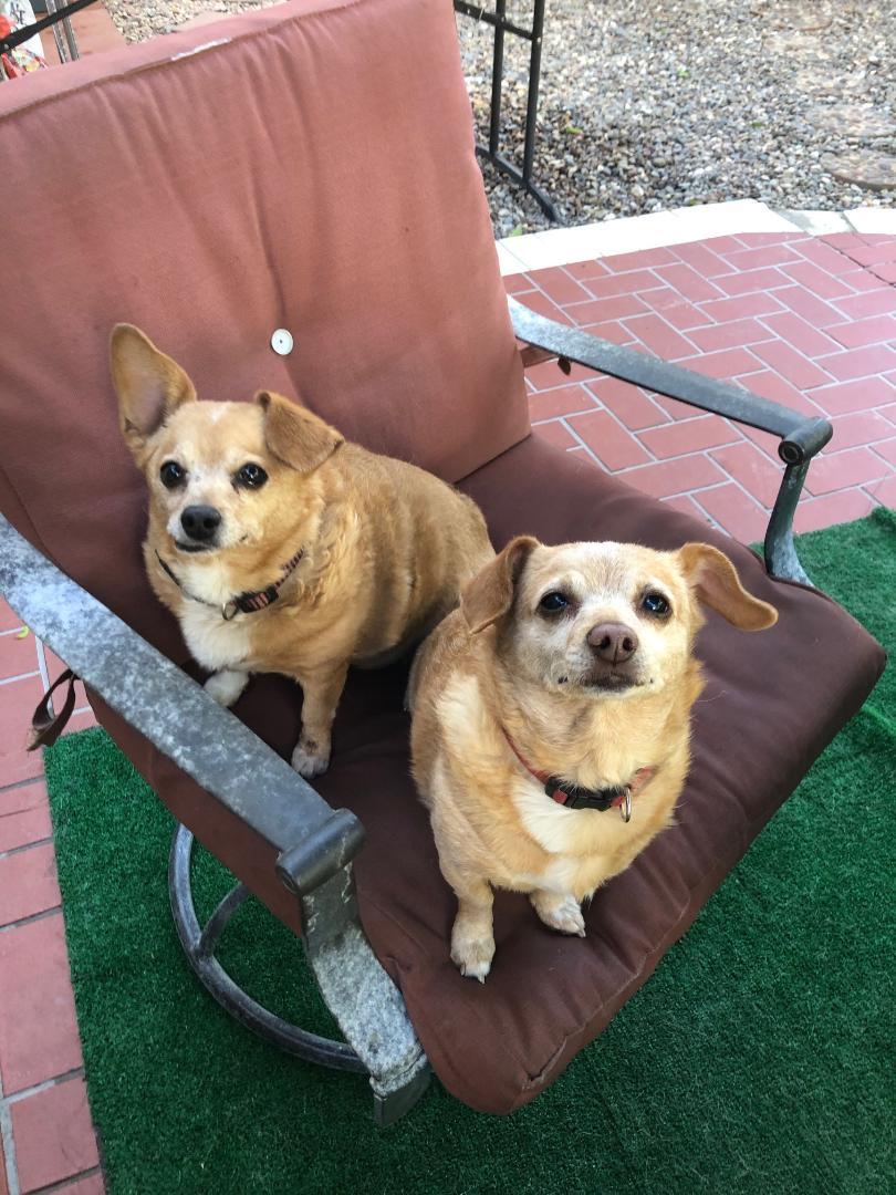 Bibbsie and Bootsie